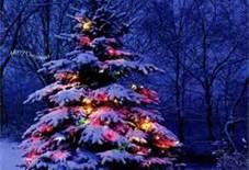 christmaslights01
